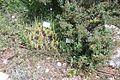 Botanical Garden on Mount Scopus visit 2011 13.JPG