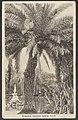 Botanical Gardens, Sydney, 1905 (8285834659).jpg