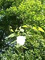 Botanical garden (Zugdidi120).jpg