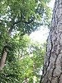 Botanical garden of Padua 106.jpg