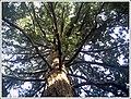 Botanischer Garten Freiburg - Botany Photography - panoramio (4).jpg