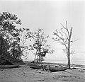 Boten aan het strand van Nickerie, Bestanddeelnr 252-5586.jpg