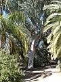 Boyce Thompson Arboretum, Superior, Arizona - panoramio (31).jpg
