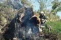 Brandeisatz Baum Flur Böschung (41526066732).jpg
