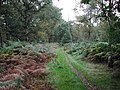 Bridleway in Sherwood Forest - geograph.org.uk - 62414.jpg