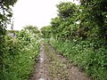 Bridleway to Greenberry Downs - geograph.org.uk - 174278.jpg