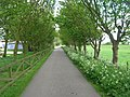 Bridleway towards Filey - geograph.org.uk - 1310418.jpg