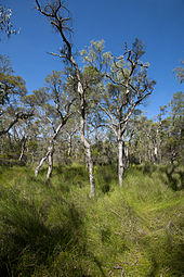 Bushland Wikipedia