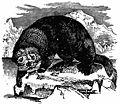 Britannica Otter.jpg