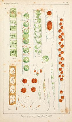 British fresh-water algae, exclusive of Desmidieae and Diatomaceae (1882-1884) (20424304451).jpg