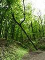 Brno, Wilsonův les (2).JPG