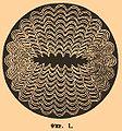 Brockhaus and Efron Encyclopedic Dictionary b16 684-1.jpg