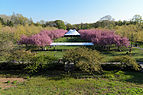 Brooklyn Botanic Garden New York May 2015 010.jpg