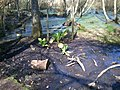 Brownsea Island nature reserve (33104633473).jpg