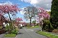 Buckingham Road, Penn, Wolverhampton - geograph.org.uk - 790124.jpg