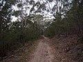 Burgh Track - panoramio (8).jpg