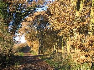 Ribbesford - Image: Burlish Top nature reserve geograph.org.uk 89959