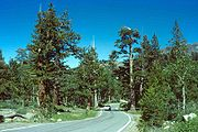 Route 4 through Humboldt-Toiyabe National Forest