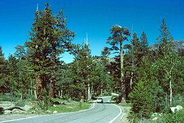Route 4 door het Humboldt-Toiyabe National Forest