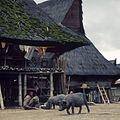 COLLECTIE TROPENMUSEUM Varkens in een Karo Batak dorp TMnr 20018496.jpg