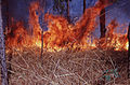 CSIRO ScienceImage 224 Fire Intensity.jpg
