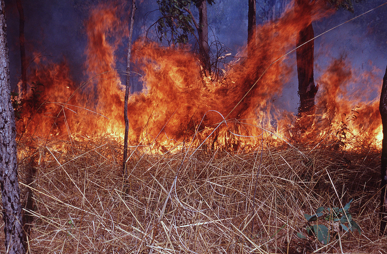 CSIRO ScienceImage 224 Fire Intensity.jpg