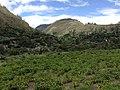 CULTIVOS - panoramio.jpg