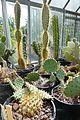 Cactacées-Jardin des plantes de Nantes (9).jpg