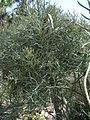 Cactus & Succulents (183439026).jpg