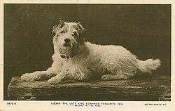 Dog Kennels Darwin Area