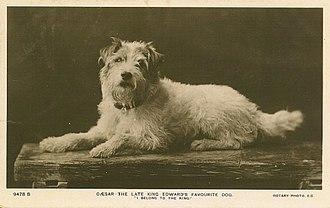 Caesar (dog) - A postcard featuring Caesar