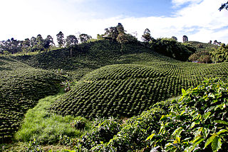 region of Colombia known for growing coffee