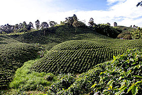 Colombian coffee growing axis - Wikipedia