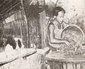 Cajput leaves for boiling, Kami Memperkenalkan Maluku dan Irian Barat, p41.jpg