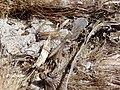 Cala Virgili Insekt 03.jpg