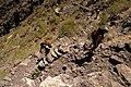 Camino de la Fortaleza de Masca - panoramio - javiersanp.jpg