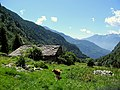 Cane a Alpigia - panoramio.jpg