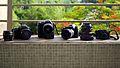 Canon - Pui Ching - Macau (7341364824).jpg