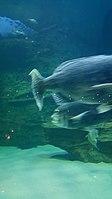 Cape Aquarium 20180719 211909 (11).jpg