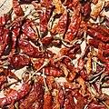 Capsicum annuum-Red Chilli Pepper 04.jpg
