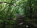 Cardiff Woods Park (29204731825).jpg