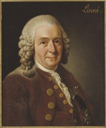 Alexander Roslin: Portrait of Carl Linnaeus, 1707-1778
