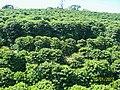 Carmo de Minas MG Brasil - Cafezal - panoramio.jpg
