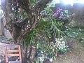 Casa de Lanaja - panoramio.jpg