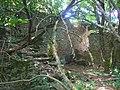 Case del borgo di Largnano invase dalla macchia - panoramio.jpg