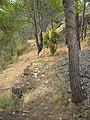 Castell de Tales DSCN2944.JPG