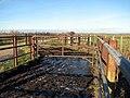 Cattle pens beside the track - geograph.org.uk - 1110276.jpg