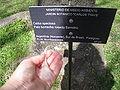 Ceiba speciosa fiber.JPG