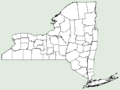 Centaurea × psammogena NY-dist-map.png