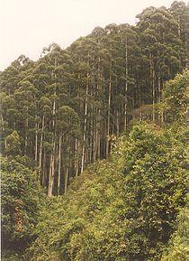 Chamrajnagar3.jpg